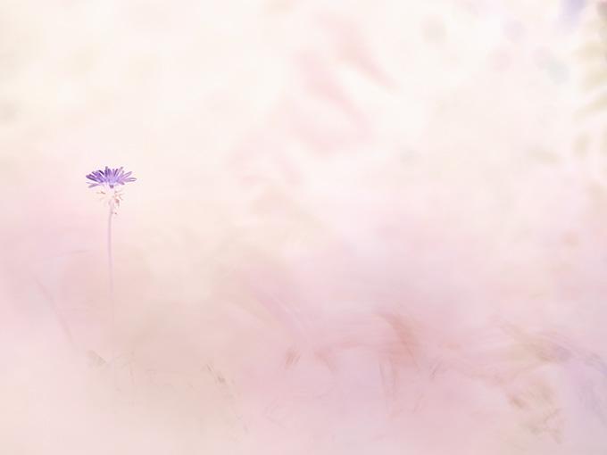 wabana*和花